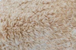 Merino Wolle aus Spanien